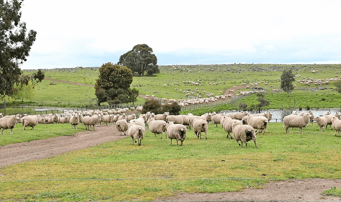 Tarnawa Pastoral