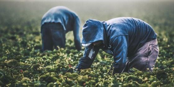 worker motivation - pickers - unsplash